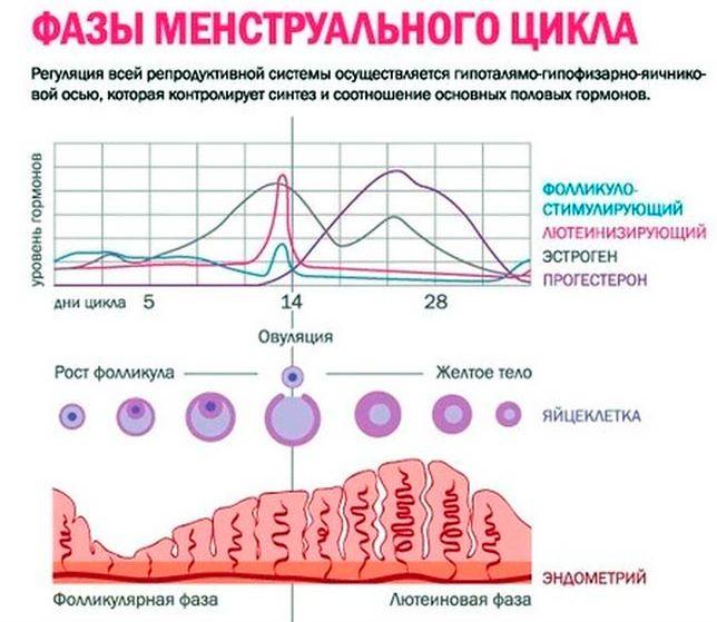 Симптомы перед месячными у женщин и девочек