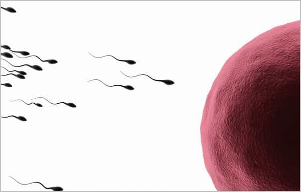 движение сперматозоидов