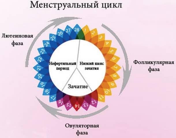 цикл нормальный