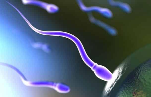 фото сперматозоида